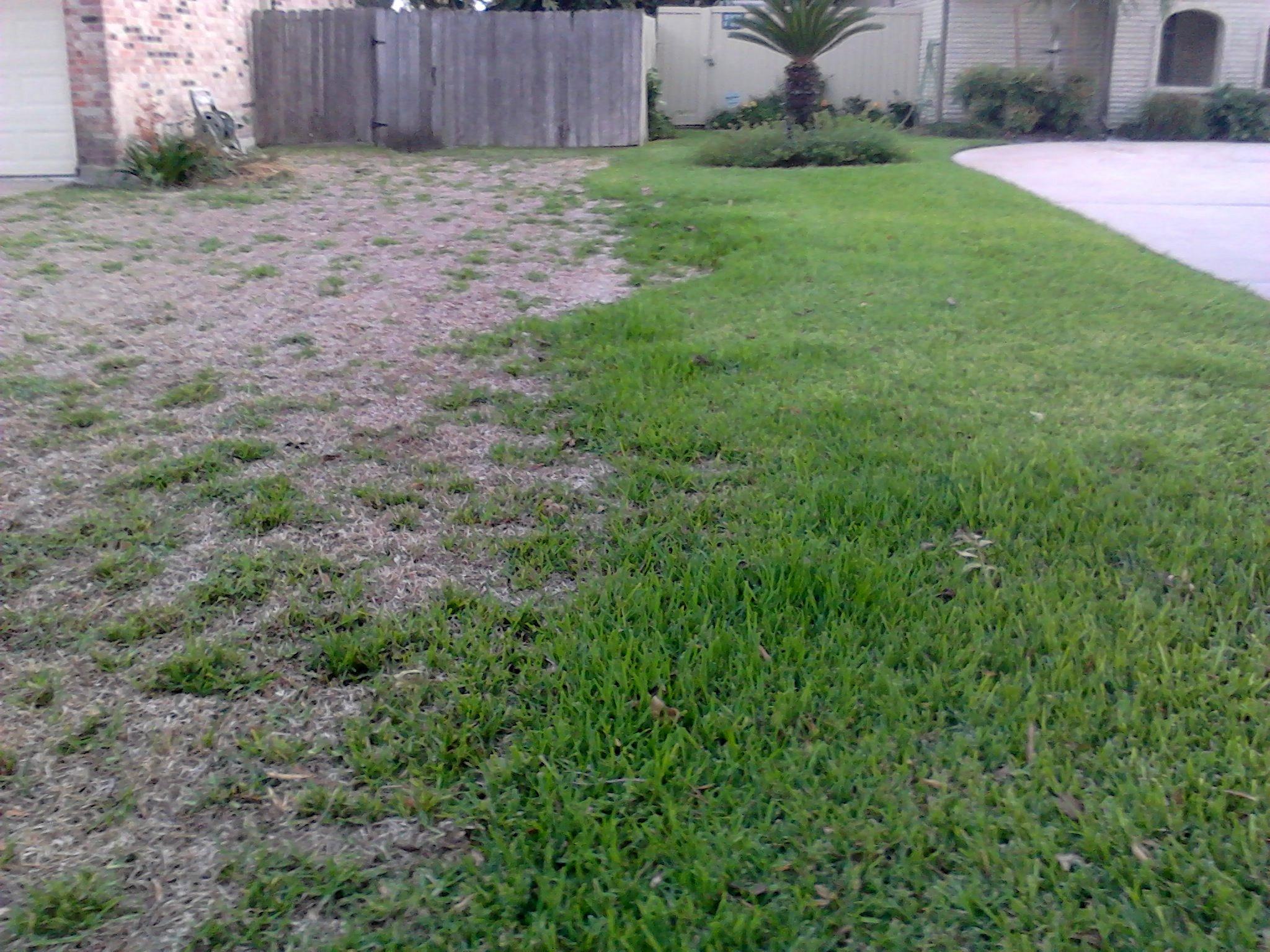 Texas Lawn Care Katy Tx Company